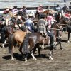 Rodeo in Lonquimay